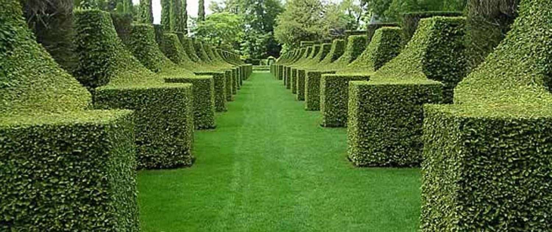 Branch jardin espaces verts branch jardin for Entretien jardin waterloo